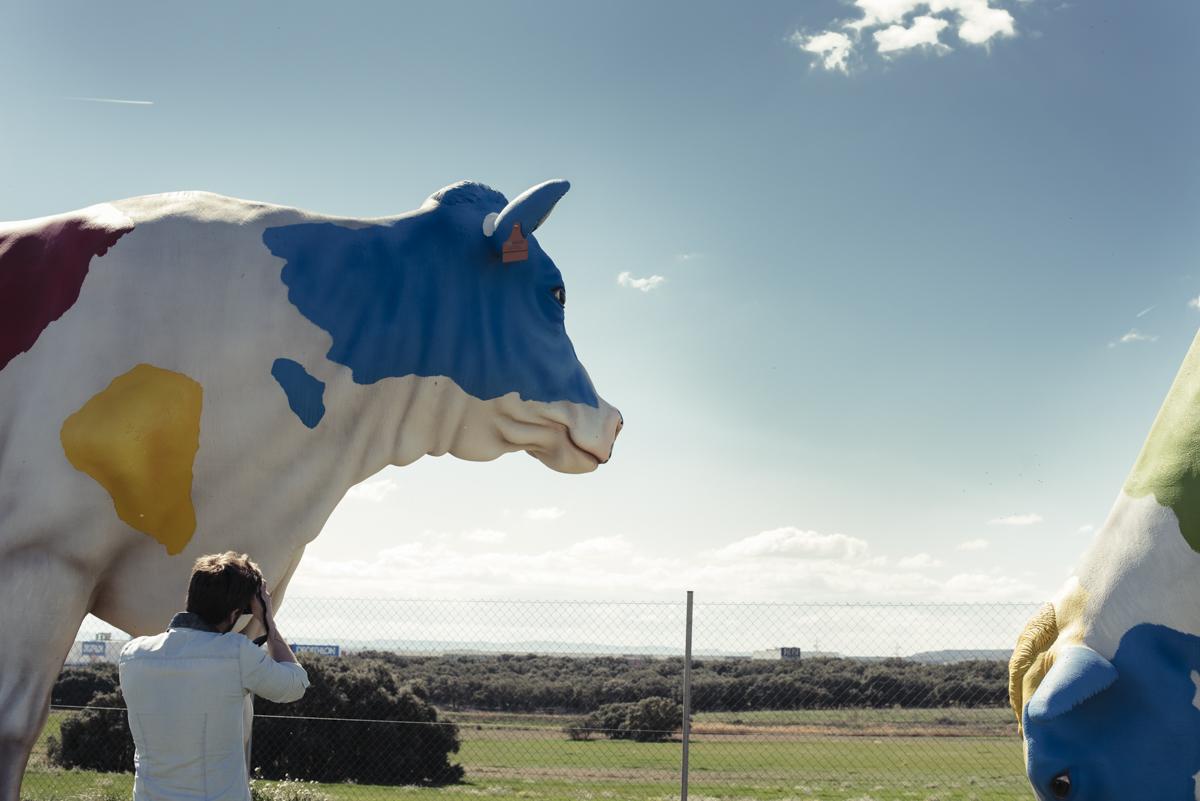 vacas-eboca